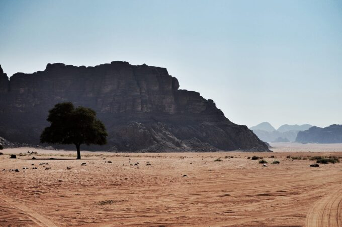 Overnight in Wadi Rum | Sleeping in the Desert - The fig tree at Lawrence Spring
