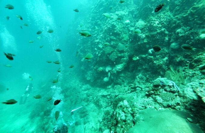 A School of fish in Ko Bi Da south of Phi Phi Island