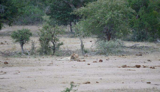 safari-13